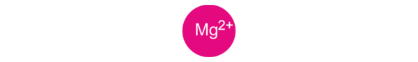 linia mg2